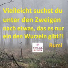 Buchzitate (@zitate_aus_buechern) • Instagram photos and videos Videos, Instagram, Quotes From Books, Rumi Quotes
