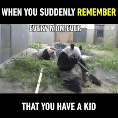 Oh This Is So Me Funny PicturesMemes Shockingly LOL Relatable Oh This Is So Me And if it's not It is So Someone You Know. One of the funniest things about relatable picsmemes is t Funny Animal Pictures, Funny Animals, Cute Animals, Funny Cute, The Funny, Hilarious, Funny Kids, Panda Mignon, Animal Memes