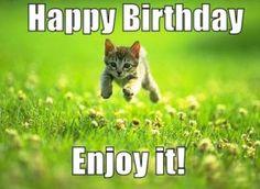 Cute Cat Birthday Meme