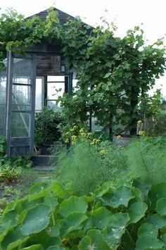 wintergarten bauen kletterpflanzen als sonnenshutz