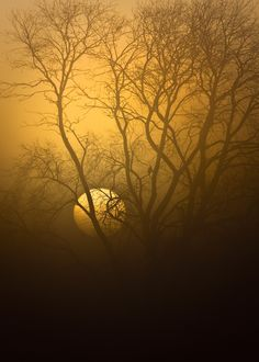 Watcher in the Fog  ~  A lone bird sits in a silhouetted tree watching the sun rise and the morning fog burn off.