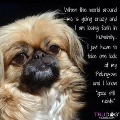 This quote is exactly how I feel too. When I'm with my dog I feel more relaxed and happier.