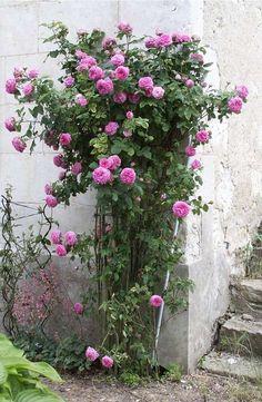 beautiful nature!!