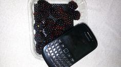 realy blackberry