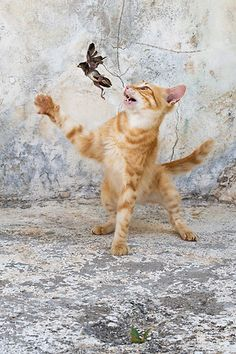 birds chasing other animals - Google Search