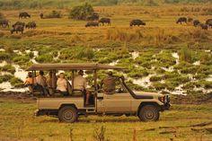 Game drive on a Zimbabwean safari