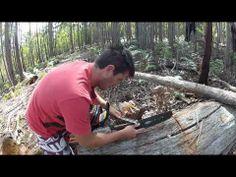BREAKING NEWS: 15th Jan 2012 Tasmanian Tiger Remains Discovered in Northern Tasmania