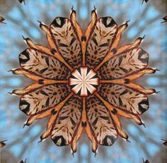 Awesome kaleidoscope photo of nature by Carol Wood! An Avant-Garde Art & Craft Show Vendor!