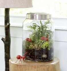 I think we'll make a terrarium for Earth Day.
