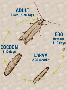 Carpet Moth Treatment and Pest Control Getting Rid Of Moths, Pantry Moths, Diy Pest Control, Cedar Closet, Home Management, Insect Repellent, How To Get Rid, Wash Walls, Things To Know