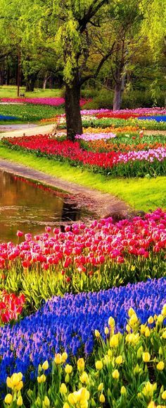 Explore the colorful Keukenhof Garden in Lisse, The Netherlands.