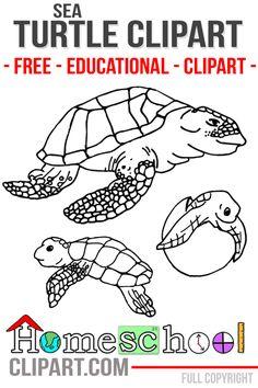 Sea Turtle Clipart