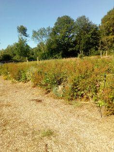 Ferme du Mas Tabouret – Maraîchage permacole et élevage poules entre Bresse et Revermont