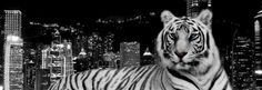 Balram and his family - Aravind Adiga: The White Tiger