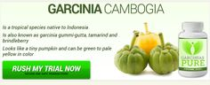 A simple way to shed pounds without even dieting or exercising is to add GARCINIAS PURE , or Conjugated Linoleic Acid, to your diet by adding supplements or weight loss protein powder. If you are in search of where buy GARCINIAS PURE supplements , check out our all-natural GARCINIAS PURE supplements. >>> http://www.garcinia-cambogiaonline.com/garcinias-pure/