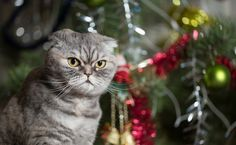 Help Your Pet Manage His Holiday Stress