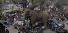 Terror en China por elefante suelto por las calles  Reportan...