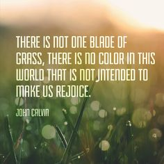 """Christian quote by John Calvin on God's beauty. """"There is not one blade of grass, there is no color in this world that is not intended to make us rejoice."""""""