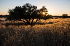 Sunset in the Kalahari, Namibia