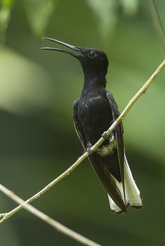Black Jacobin - REGUA - Brazil_S4E2449 | by fveronesi1