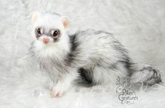 Sample Work ~ Lifesize White Ferret ~ Realistic Art Doll ~ Poseable Fantasy Creature