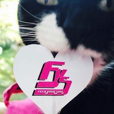 #fysfeedyoursoul #mygreatcat #my_loving_pet #cat #gatto #catoftheday #catsofinstagram #catstagram #gatti #instacat #instacat_meows #bestmeow #topcatphoto #miao #catlover #gatto #catoftheday #katze #gato #chat #猫  #neko #猫好き #Exellent_Cats #子猫 #プッシーキャット #ニャー #甘い #愛猫