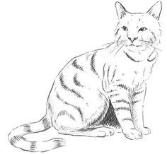 corso di grafica e disegno per imparare a disegnare: Come disegnare un gatto
