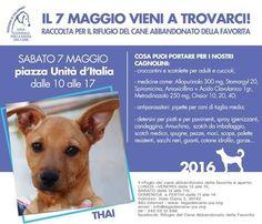 7/5 Raccolta di viveri e farmaci per i #randagi di #Palermo organizzata dalla Sede locale di #LegadelCane
