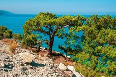 Somewhere near #Oludeniz - incredible mix of green and turquoise