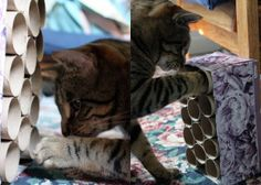 make this DIY cat puzzle toy! Keep them curious for hours!