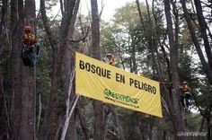 Greenpeace interviene las oficinas de empresas inmobiliarias que pretenden desmontar bosques patagónicos.