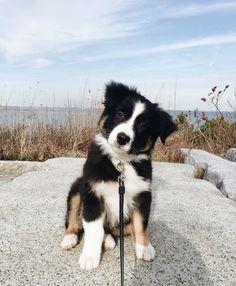 10 races de petits chiens qui vivront heureux en ville ou