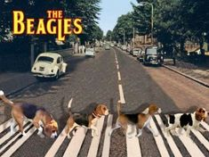 cats abbey road - Google Search