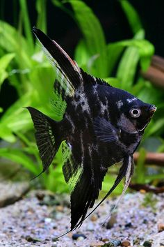 Tropical Fish Store, Tropical Fish Aquarium, Tropical Freshwater Fish, Beautiful Fish, Animals Beautiful, Betta Aquarium, Deep Sea Creatures, Underwater Creatures, Majestic Animals