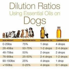 Dilution Ratios - Dogs Cold Sore Essential Oil, Essential Oils For Congestion, Natural Essential Oils, Essential Oil Blends, Coconut Oil For Dogs, Homemade Dog Treats, Doggie Treats, Large Dog Coats, Aromatherapy For Dogs