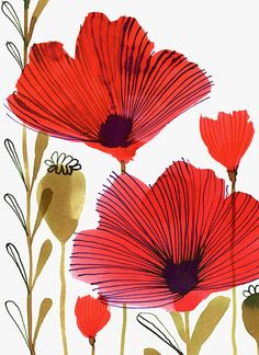 Wild Poppies © Margaret Berg Art www.margaretbergart.com
