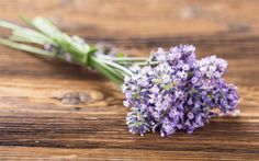 Download wallpapers lavender, purple flowers, bouquet, wild flowers