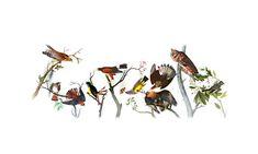 Birds of America catalogued by John James Audubon, who turns 226 today Best Google Doodles, Doodle 4 Google, Art Google, Google Images, Birds Of America, North America, John James Audubon, Best Artist, Fine Art