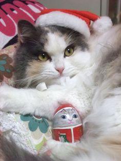 2008 Christmas.