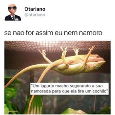 Se n for assim eu nem quero #otariano Safely Endangered, Little Memes, Life Rules, Try Not To Laugh, Ignore Me, Funny Cute, Its Okay, I Laughed, Funny Memes