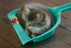 Awww so cute! | PHOTO OP: Kitty Clean Up in Aisle 7 Via juco @ http://www.flickr.com/photos/julie_coulter/ | @thefluffingtonpost