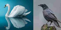Kai, Bird, Animals, Animales, Animaux, Birds, Animal, Animais, Chicken