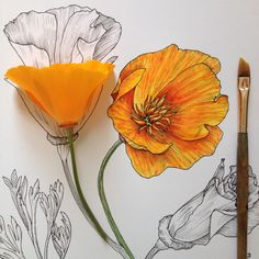 Gorgeous! Contemporary style botanical art by Noel Badges Pugh.