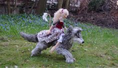 Kashuu the wolf and his magical companion Emmoise the fae  https://www.etsy.com/no-en/listing/186927060/magical-companions-wolf-and-little-fae?ref=shop_home_feat_4