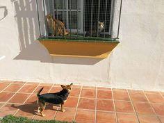 Ratos en casa con Richie, Orión y Nala 01/17