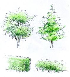 手描きパースの描き方ブログ、パース講座(手書きパース):建築パース Plant Sketches, Tree Sketches, Drawing Sketches, Garden Drawing, Plant Drawing, Painting & Drawing, Landscape Sketch, Landscape Drawings, Landscape Design