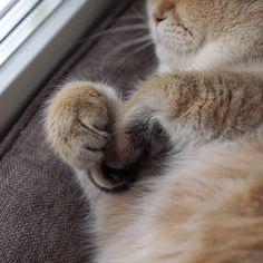 "Kitty Photo From @hosico_cat: ""Hosico sleep."""