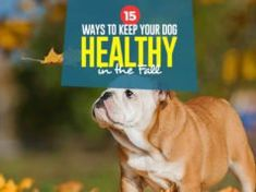 15 Ways to Keep Your Dog Healthy in the Fall Tick Removal Dog, Ticks, Pets, Healthy, Fall, Animals, Autumn, Animales, Fall Season