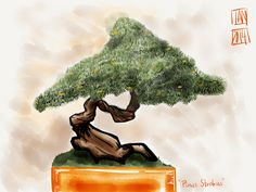 """Pinus Strobus """"Eastern White Pine"""""""