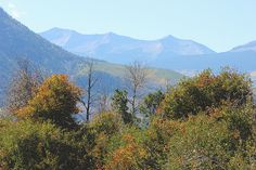 Autumn's Telltale Signs in the Ragged Mountains of Colorado